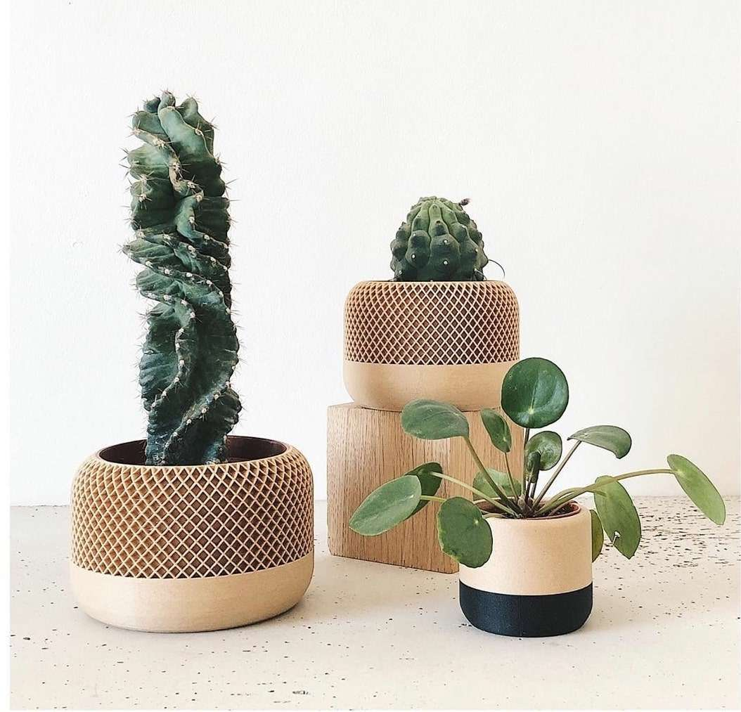 cat-planten-min